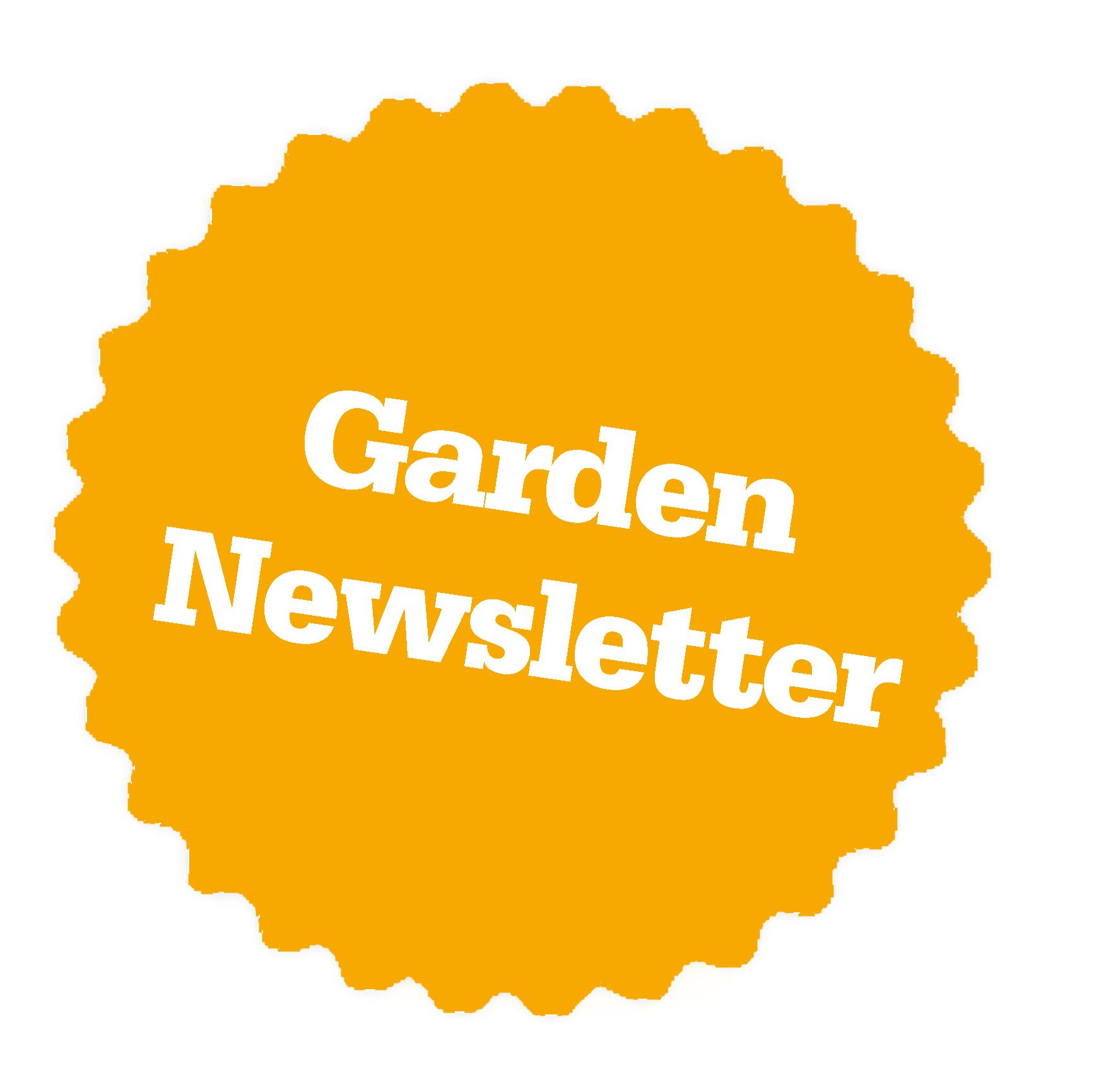 GFG Star_Garden Newsletter_orange